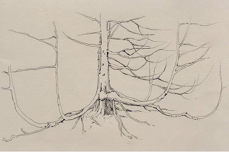 Quan Wang journal sketch
